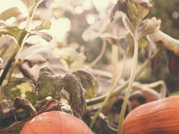 Wellbeing Article: Autumn Health by Amelia Freer
